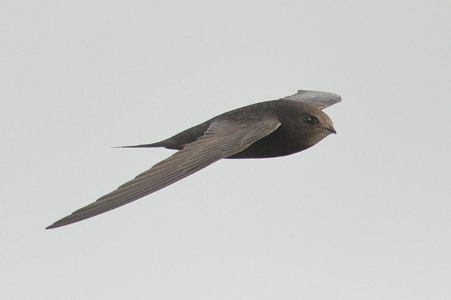 Звук взмахов крыльев птицы скачать